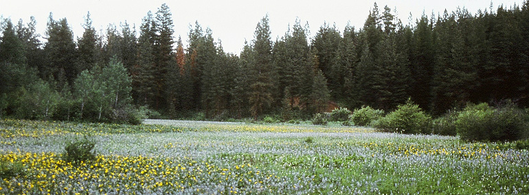Color photo of Camas Meadows Natural Area Preserve (NAP)