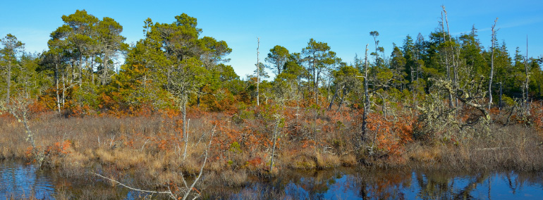 Color photo of North Bay Natural Area Preserve
