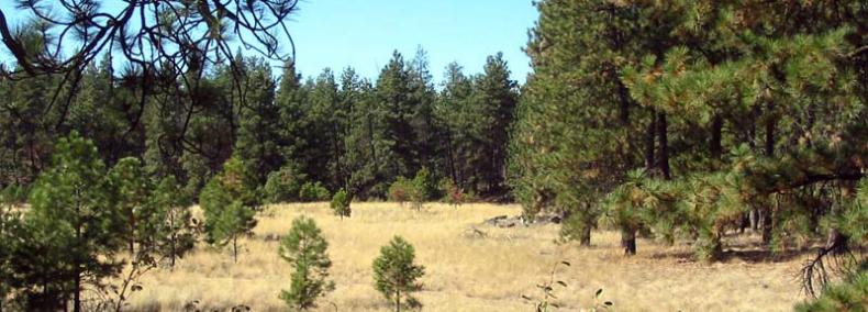 Pinecroft Natural Area Preserve | WA - DNR