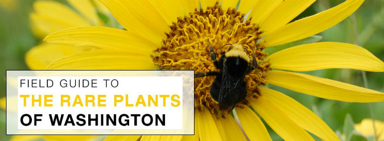 This Online Guide Is An Adaptation Of Our Field Guide To The Rare Plants Of  Washington, Which Was Published In 2011 With The Intent To Aid Amateur And  ...