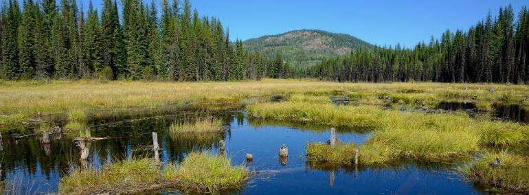 wetland and riparian vegetation types