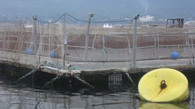 Net pen aquaculture outside Port Angeles