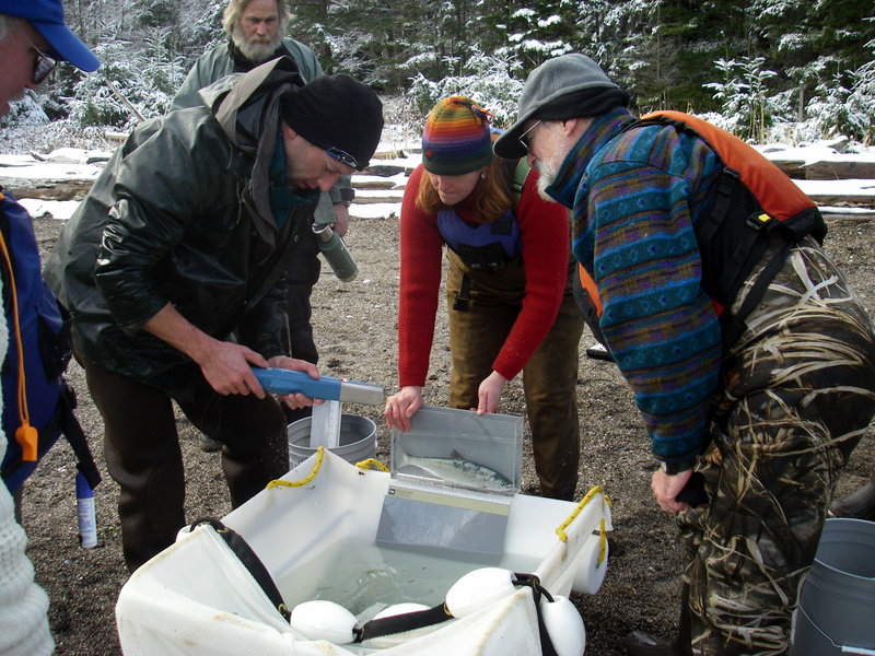 Citizen scientists work with DNR on Cypress Island.