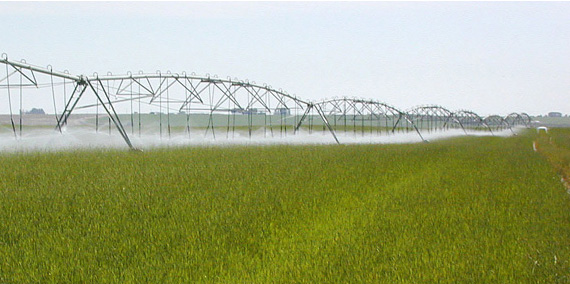 Agricultural land is irrigated by large sprinklers