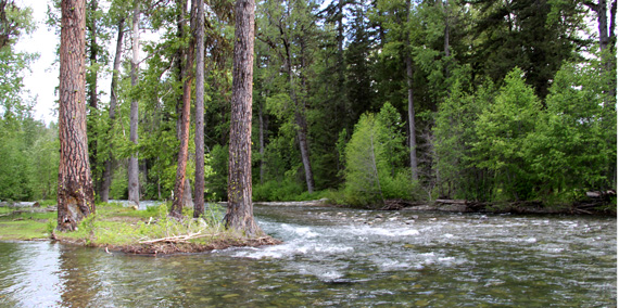 Color photo of River in Teanaway Community Forest