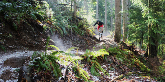 Color photo of mountain biker riding trail on Tiger Mt.