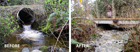 before and after fish barrier removal