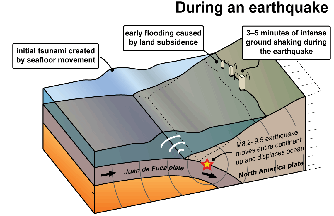Tsunamis wa dnr the following series of diagrams shows how tsunamis are created along the cascadia subduction zone pooptronica Image collections