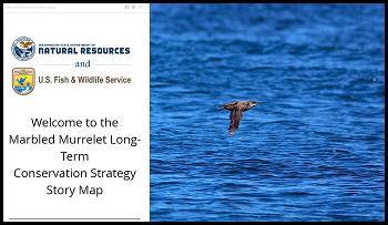 marbled murrelet DEIS story book
