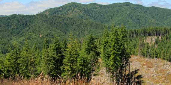 Olympic Experimental State Forest Land Planning | WA - DNR