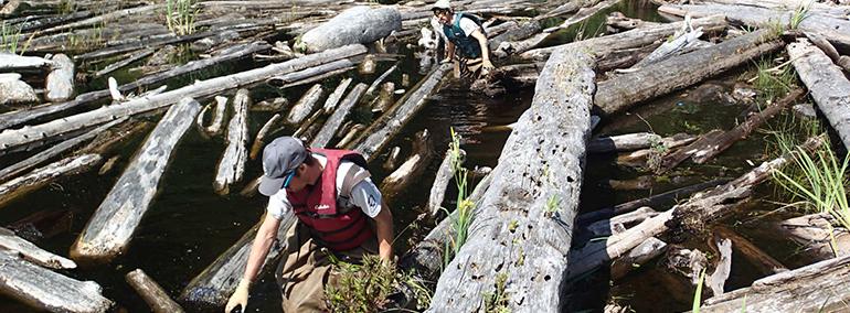 DNR crews remove woody debris