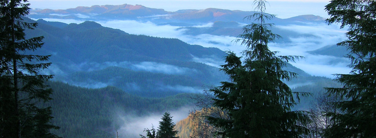 Forest and Trust Lands | WA - DNR