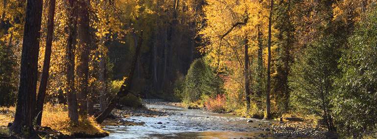 Color photo of fall foliage and river in Teanaway Community Forest