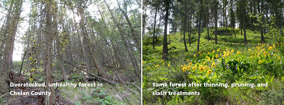 Two photos showing before and after forest treatments
