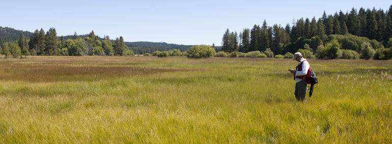 WNHP ecologist surveys wetland at Panakanic Meadow