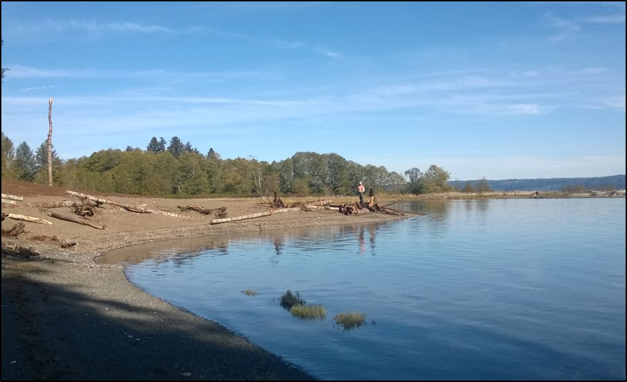 After photo of shoreline restoration in Hood Canal